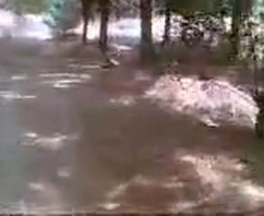 Запал молодых узбеков в лесу UZBAK.RU